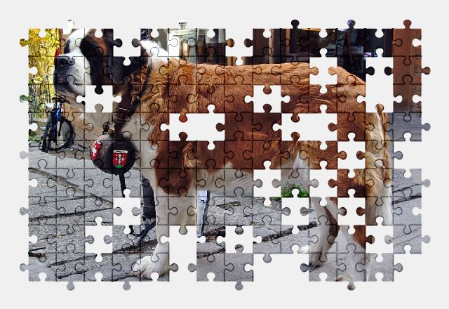free jigsaw puzzle online dog,switzerland,animal