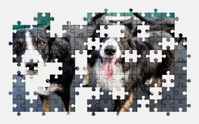 free jigsaw puzzle online animal,cute,dog,nature