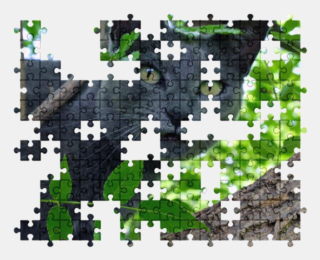 free jigsaw puzzle online cat,pet,animal,cute,adorable