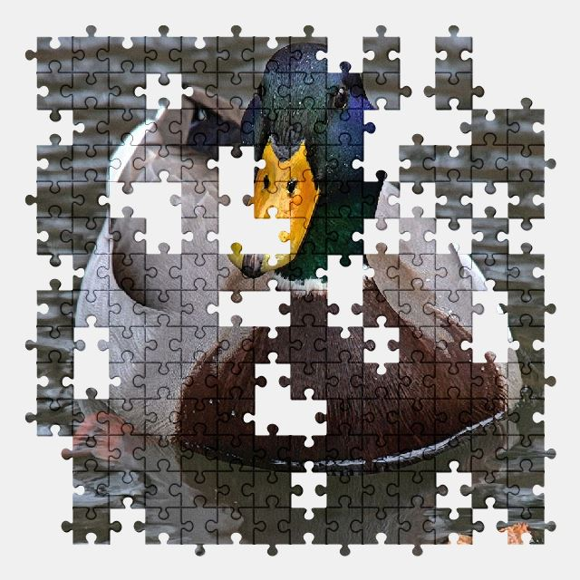 free jigsaw puzzle online duck,animal,bird,nature