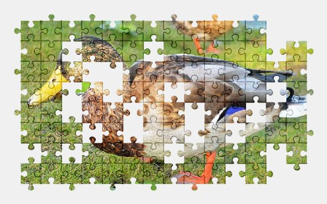 free jigsaw puzzle online duck,bird,animal,birds