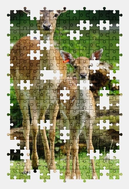 free jigsaw puzzle online deer,animal