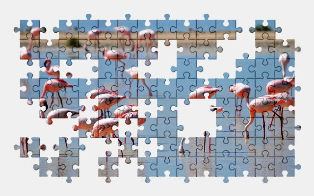 free jigsaw puzzle online flamingo,nature,pink,water,bird