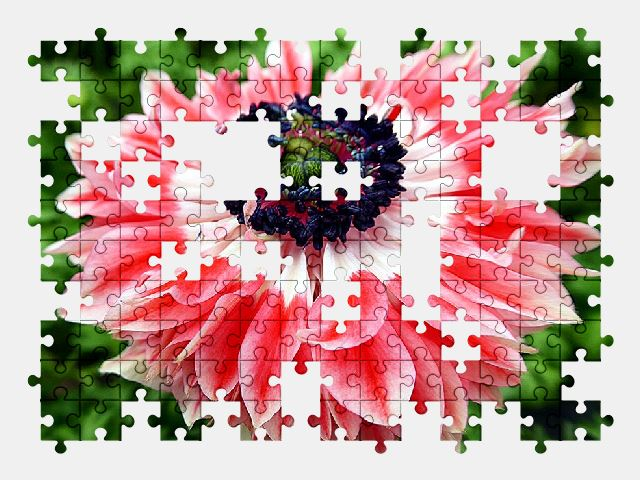free jigsaw puzzle online flower,pink,nature,beautiful