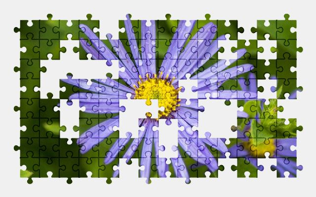 free jigsaw puzzle online flower,bloom,blossom,nature,spring,plant