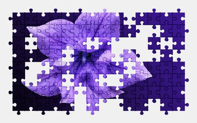 free jigsaw puzzle online flower,blossom,bloom,purple,plant