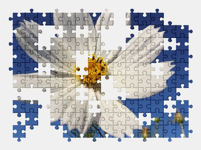 free jigsaw puzzle online flower,spring,nature,garden,beautiful,cosmos