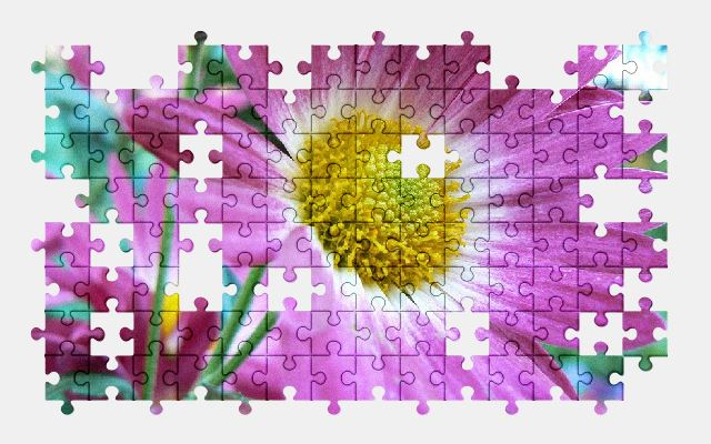 free jigsaw puzzle online flower,daisy,floral,nature,blossom,spring,plant
