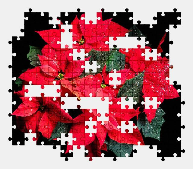 free jigsaw puzzle online flower,poinsettia,plant,nature