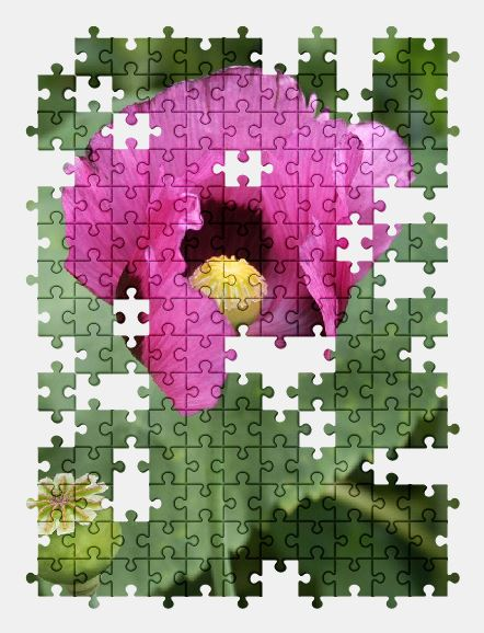 free jigsaw puzzle online flower,poppy,summer,green,garden,nature