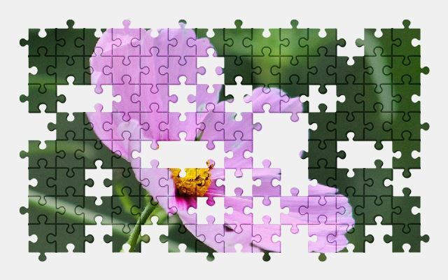 free jigsaw puzzle online flower,spring,nature,beauty,pink