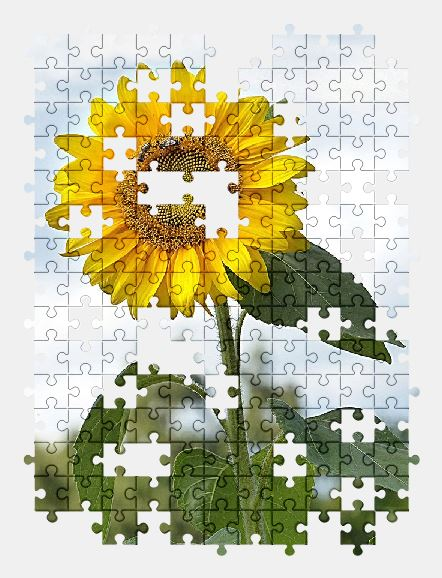 free jigsaw puzzle online flower,sunflower,nature,plant