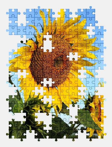 free jigsaw puzzle online flower,sunflower,yellow,nature,blossom,bloom