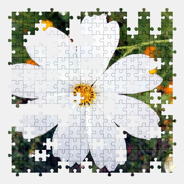 free jigsaw puzzle online flower,white,summer,nature,garden