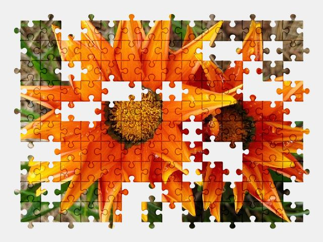free jigsaw puzzle online flowers,flower,nature