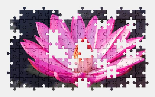 free jigsaw puzzle online flower,pink-flowers,water-lily,pond