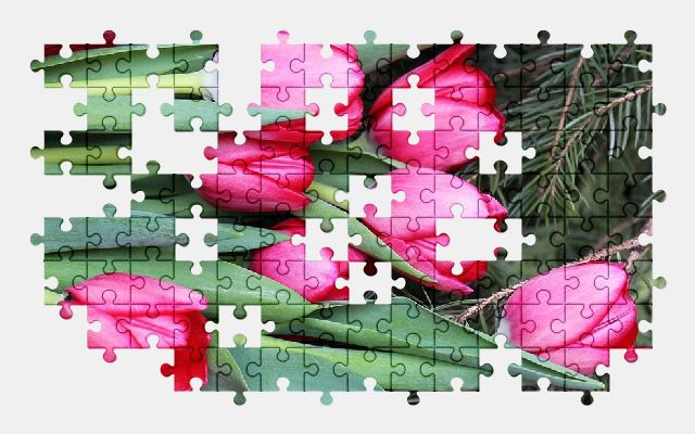 free jigsaw puzzle online flowers,tulip,pink,spring,nature,flower
