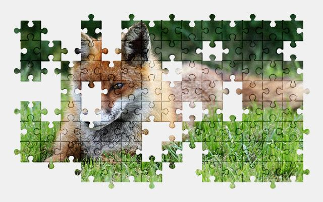 free jigsaw puzzle online fox,animal,wild,nature,red