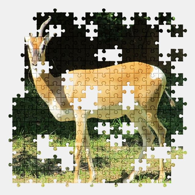 free jigsaw puzzle online gazelle,antelope,wildlife,nature,animal