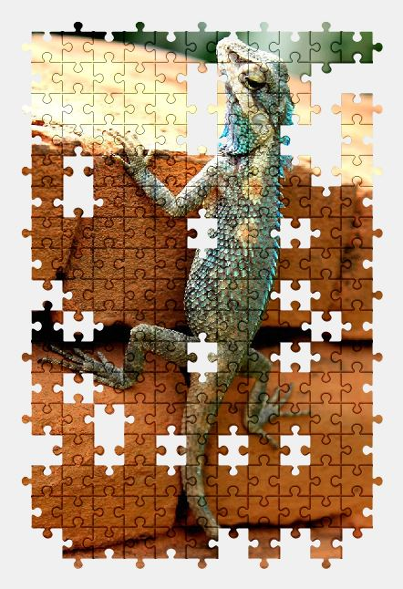 free jigsaw puzzle online animal,lizard,reptile