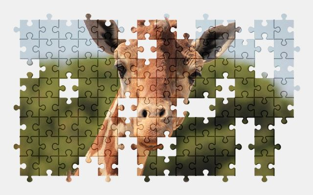 free jigsaw puzzle online giraffe,africa,animal,nature