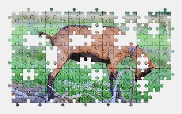 free jigsaw puzzle online goat,farm,animal,nature