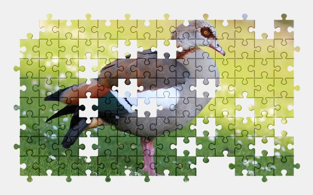 free jigsaw puzzle online goose,bird,nature,wild,park,animal