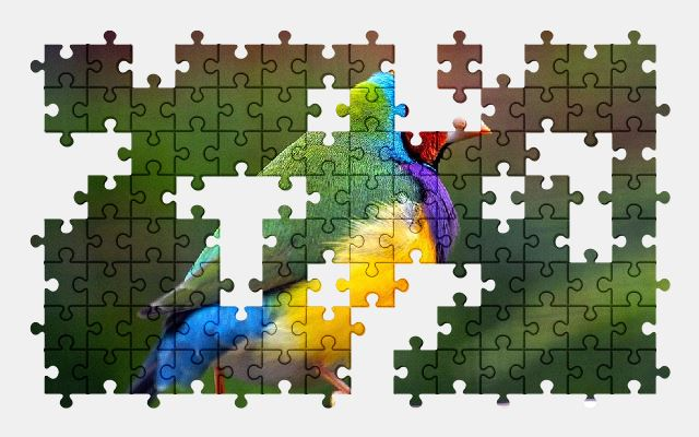 free jigsaw puzzle online bird,wildlife,nature,colorful,animal