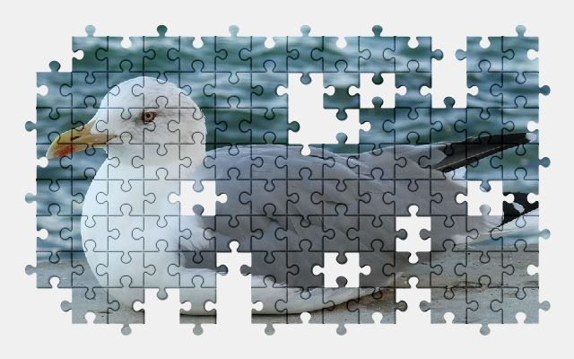 free jigsaw puzzle online seagull,bird,animal