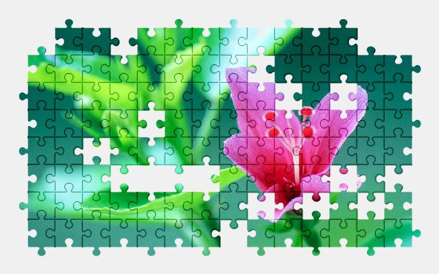 free jigsaw puzzle online hibiscus,flower,pink,nature,plant