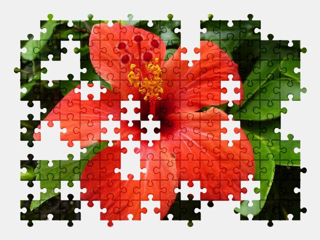 free jigsaw puzzle online hibiscus,blossom,bloom,red,flower,nature