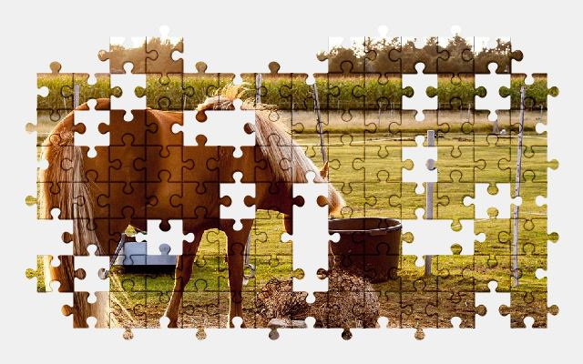 free jigsaw puzzle online horse,pasture,animal,nature
