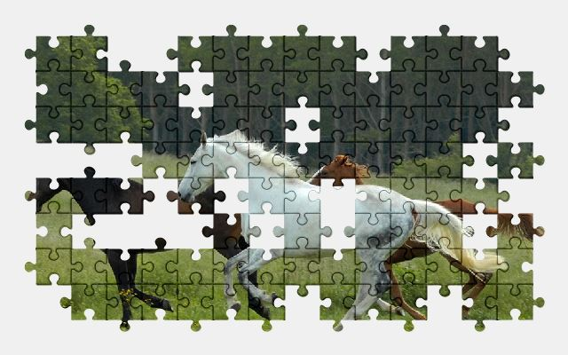 free jigsaw puzzle online horse,horses,nature,animal,grass