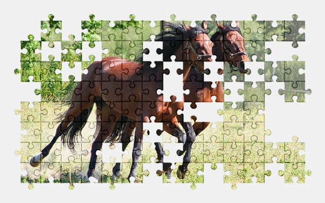 free jigsaw puzzle online horse,animal,nature