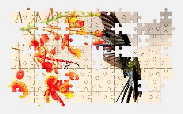 free jigsaw puzzle online bird,cuba,wildlife,nature,flower