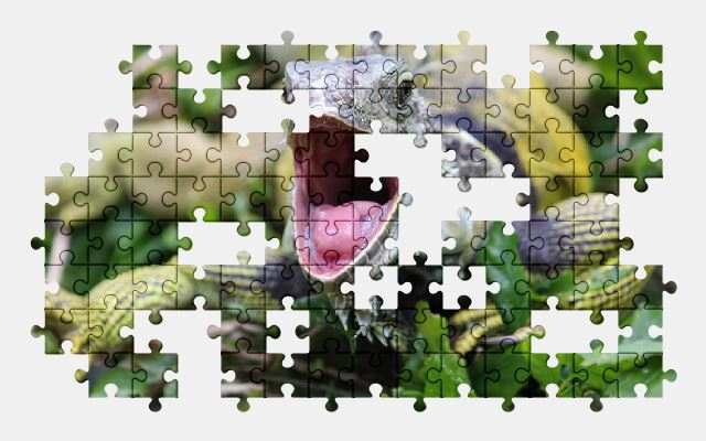 free jigsaw puzzle online iguana,animal,lizard,nature