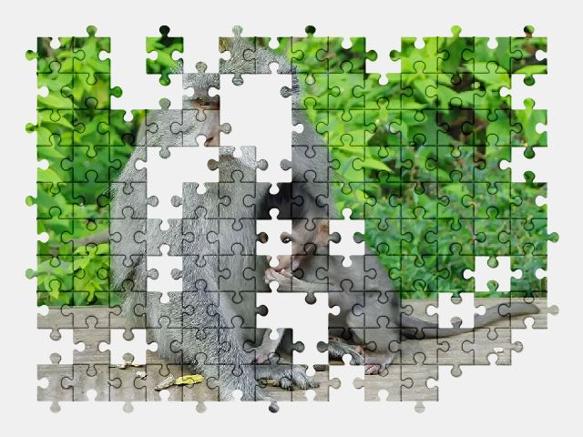 free jigsaw puzzle online indonesia,monkey,primate,animal