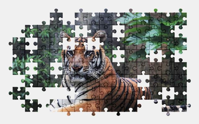 free jigsaw puzzle online indonesia,tiger,wildlife,animal