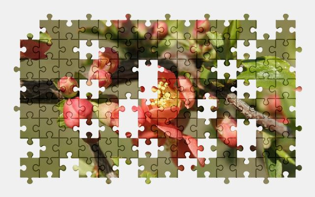 free jigsaw puzzle online flower,nature,spring