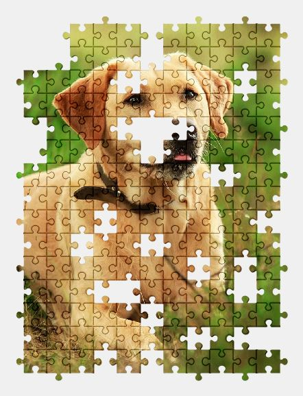 free jigsaw puzzle online labrador,dog,animal,nature