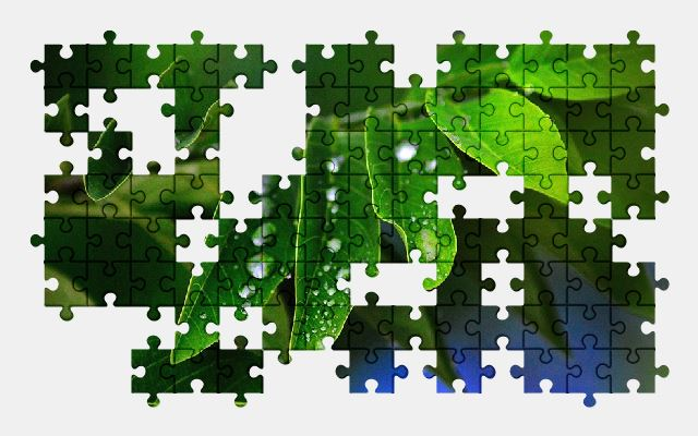 free jigsaw puzzle online leaves,green,plant,nature