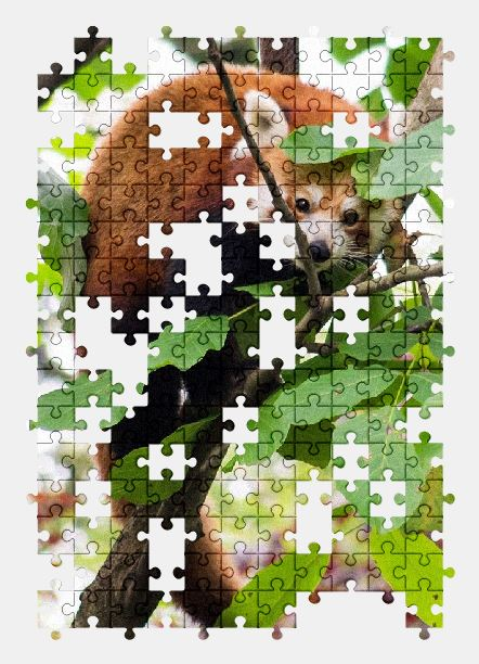 free jigsaw puzzle online red-panda,zoo,nature,animal,park