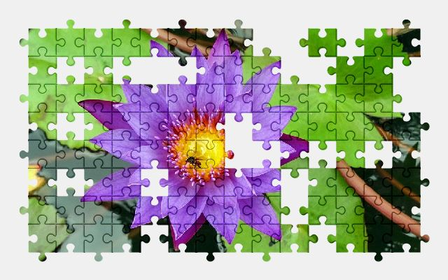free jigsaw puzzle online lily,flower,water-lily,nature,pond
