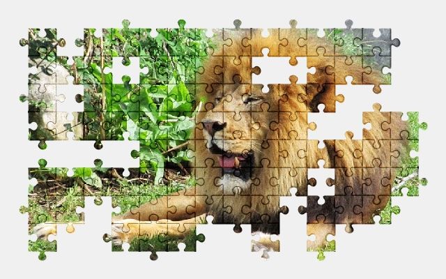 free jigsaw puzzle online lion,big-cat,animal,predator