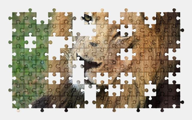 free jigsaw puzzle online lion,africa,animal