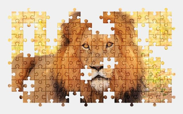 free jigsaw puzzle online lion,nature,wildlife,africa,safari,animal