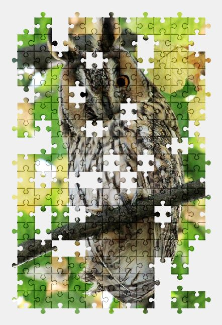 free jigsaw puzzle online owl,bird,animal,nature