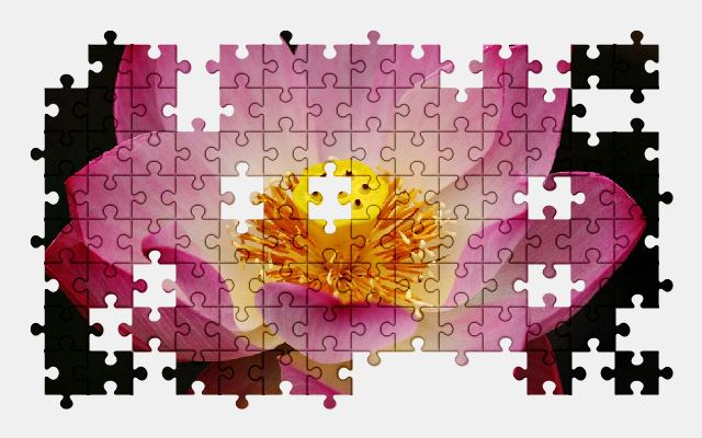 free jigsaw puzzle online lotus,flower