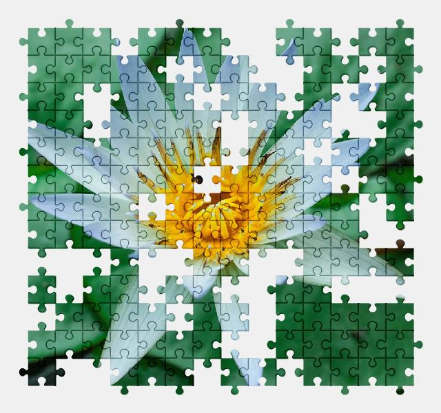free jigsaw puzzle online lotus,flower,nature,green