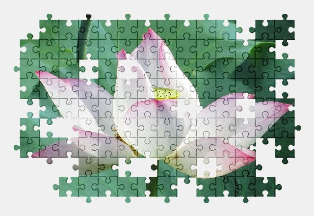 free jigsaw puzzle online lotus,plant,flower,nature